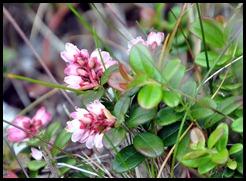 04v6 - Flowers -