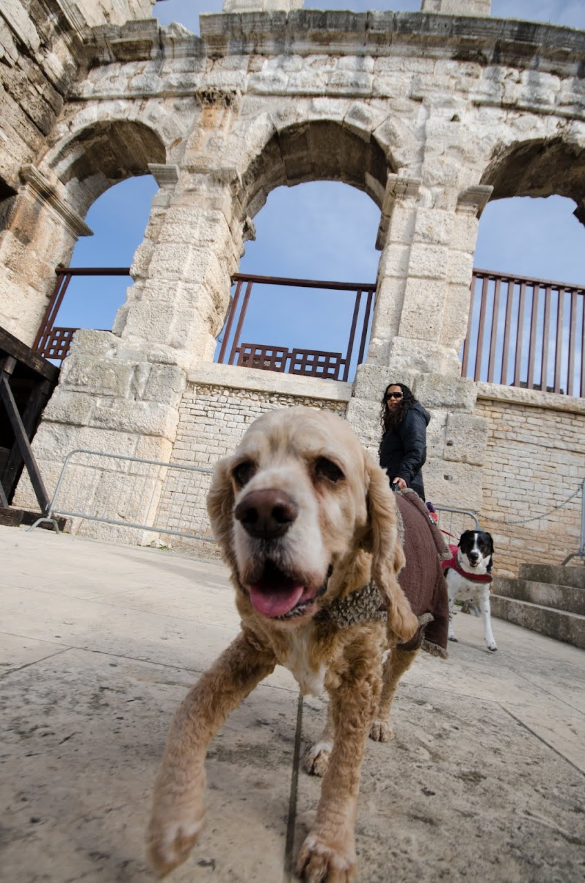 Chewy at the Pula Amphitheatre