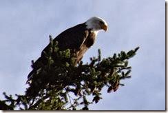 lopez eagle 100913 00000
