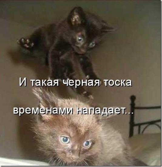 1246349688_jivotnie_9