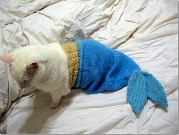 cat-dog-outfit-14
