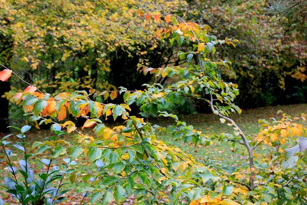 L 39 automne 6 jardin de nadya for Les jardins 4 saisons