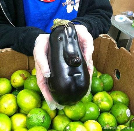 legumes e formas13