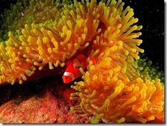 anemon-clownfish-anton-w-lowres