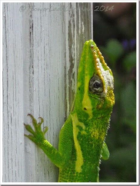 08-10-lizard5