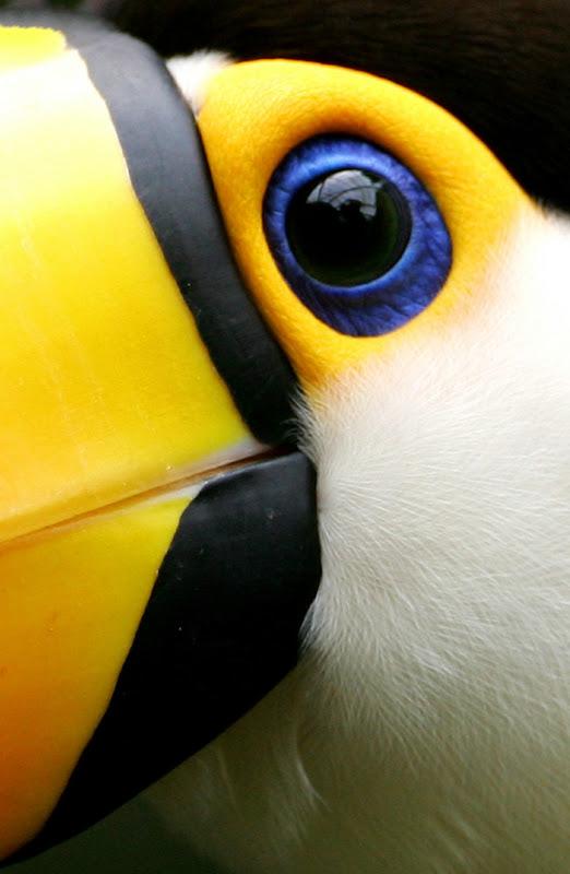 yellow_023.jpg