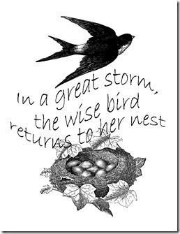 wise bird