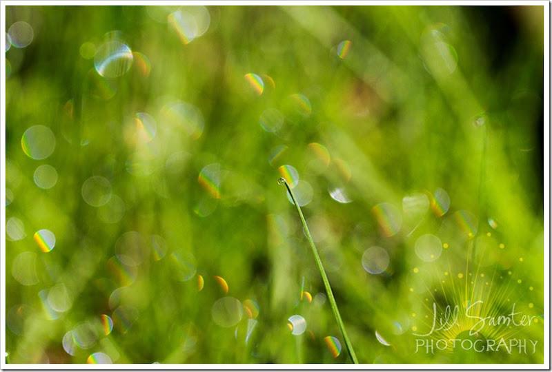 dewdrops-4734