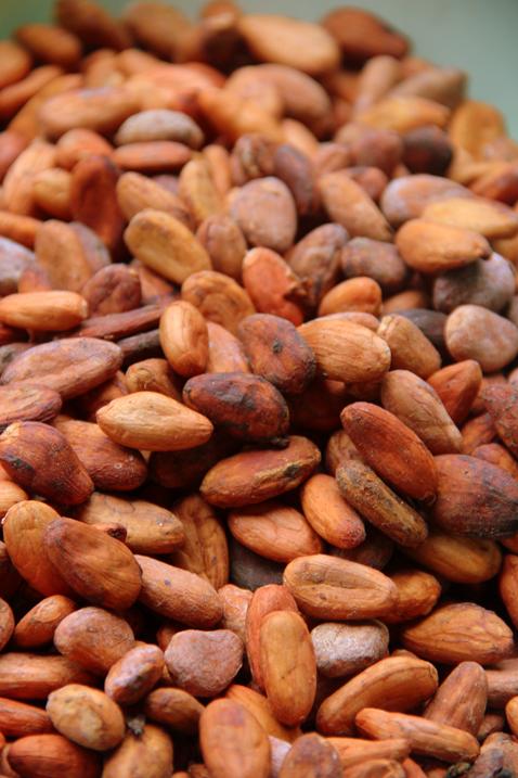 kakaobönor