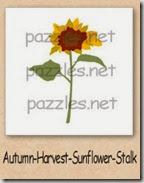 sunflower-200