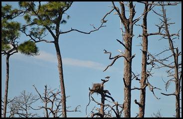 09 - Osprey Nest
