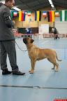 20130511-BMCN-Bullmastiff-Championship-Clubmatch-1804.jpg