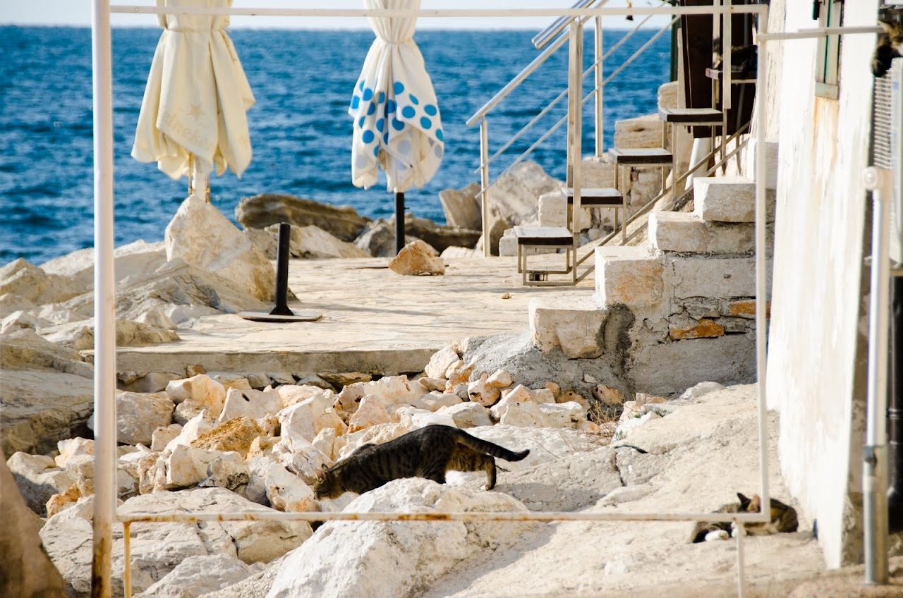 Cats in Rovinj