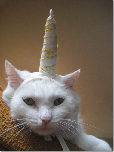 gatos disfrazados de unicornio (1)