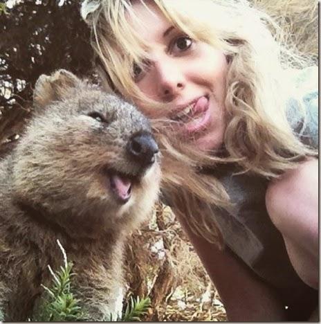 selfies-australian-quokka-012