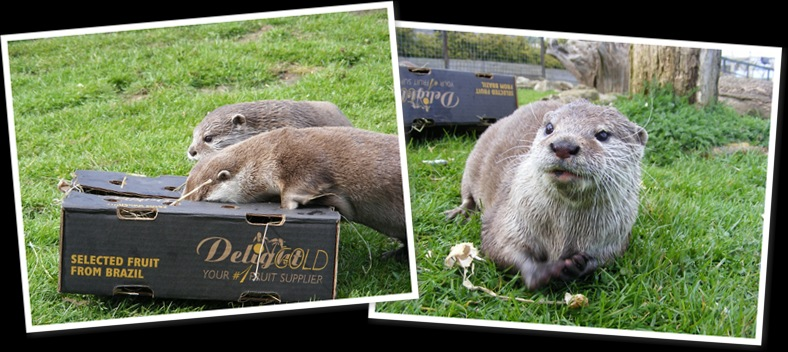 View otter box enrichment