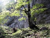 Obsijano drevo ob vzponu iz Vrtače