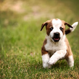 Freckles  by Sabrina Causey - Animals - Dogs Puppies ( playing, puppies, nature, cute, running )