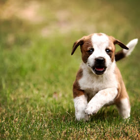 Freckles  by Sabrina Causey - Animals - Dogs Puppies ( playing, puppies, nature, cute, running, #GARYFONGPETS, #SHOWUSYOURPETS,  )