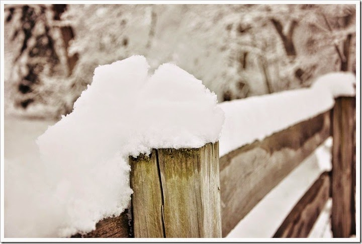 snow topped fenceVW