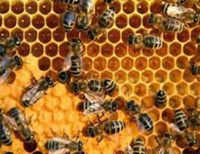 Amazing Pictures of Animals, Photo, Nature, Incredibel, Funny, Zoo, Bee, Insetcs, Anthophila, Alex (11)