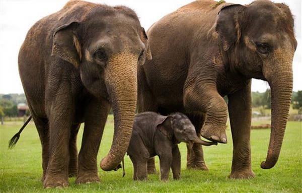 3- Elefantes africanos