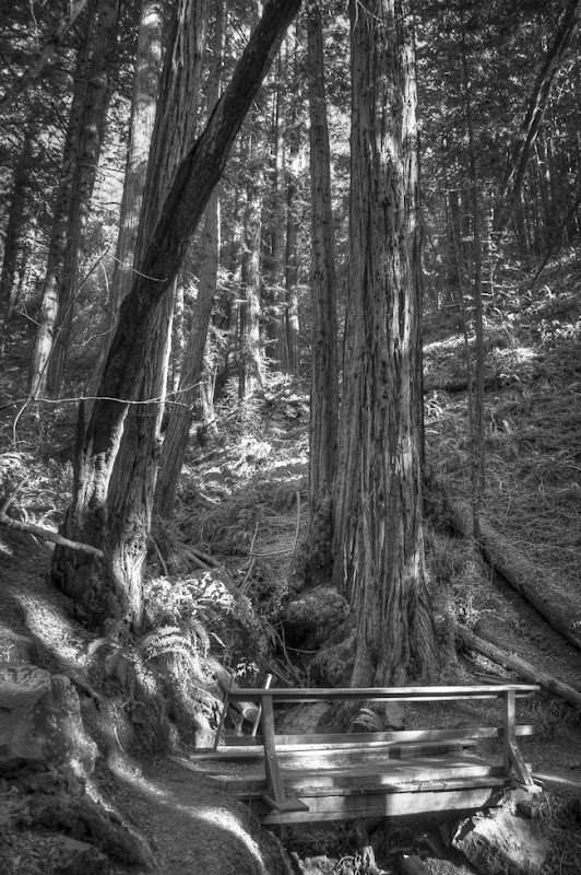 Muir Woods Black and White-9