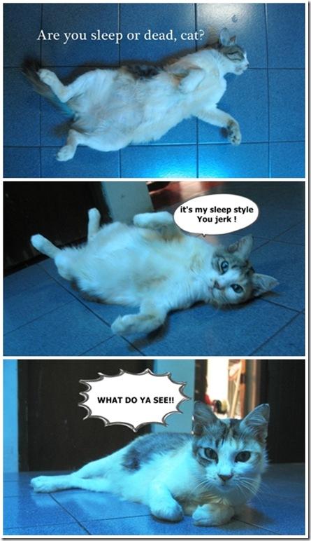dead-cat