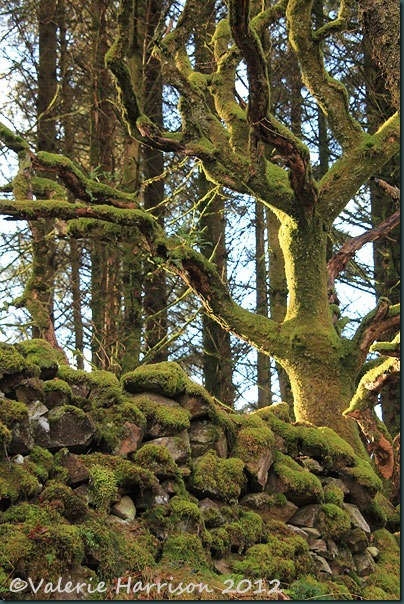 8-mossy-wall-and-tree