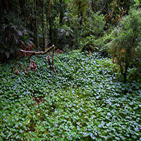 A clearing in the rainforest, Lamington National Park