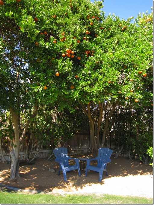 Seating under citrus grove