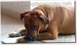 Responsabilidades de una mascota: educar, ejercitar, asear, cuidar, amar