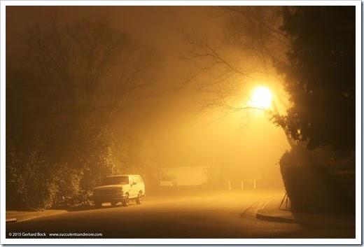 150123_fog_night6