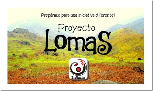 proyecto-lomas