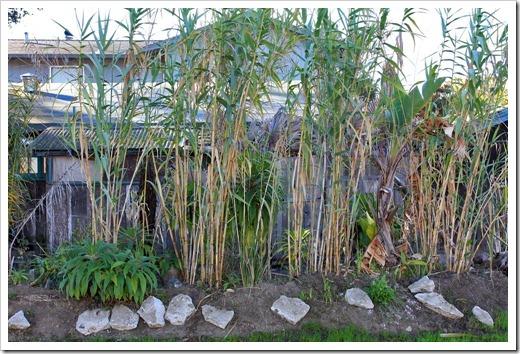 121028_SantaCruz_sugarcane