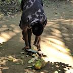 Frische Kokosnüsse werden aufgeschnitten © Foto: Angelika Krüger | Outback Africa Erlebnisreisen