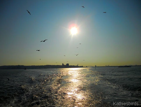 15. sunset blue-kab