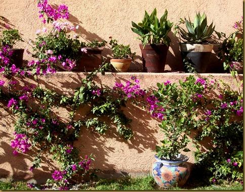 back yard December 2010 005