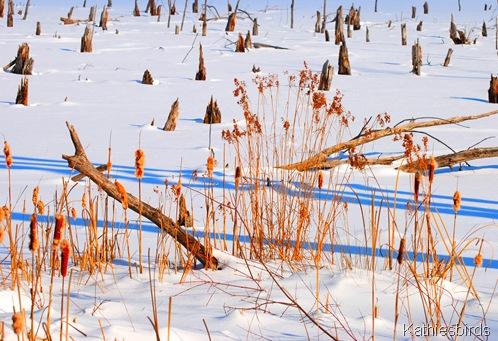 7. winter bog-kab