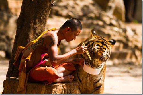 monje-tigre