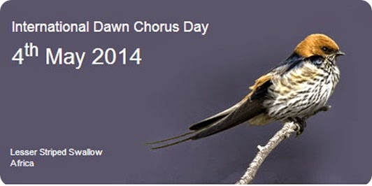 dawn chorus 2014 day international