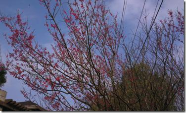 螢幕快照 2013-03-16 下午12.16.41