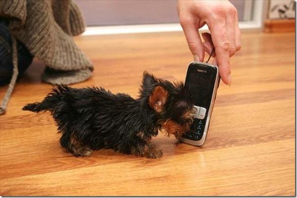 Terrier Meysi (8)