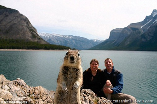 50_Funniest_Animal_Photobombs_Of_All_Time_39