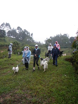 Dogs Trekking 4 (222)