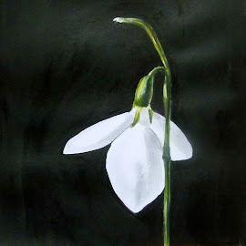 Snowdrop by Georgiana Atasiei - Drawing All Drawing ( snowdrop, drawing )