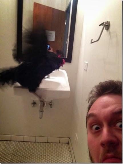bathroom-craziness-040