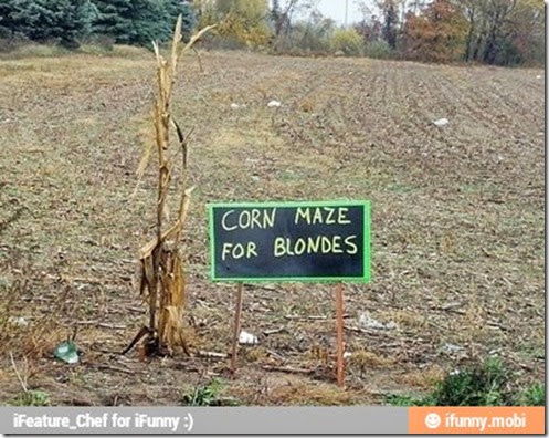 blonde_corn_maze