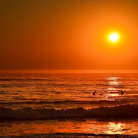 Sunset Surfing by Jennifer Gilfillan - Landscapes Sunsets & Sunrises ( water, surfing, silhouette, sunsets, sunset, nighttime, night, ocean, surfers )