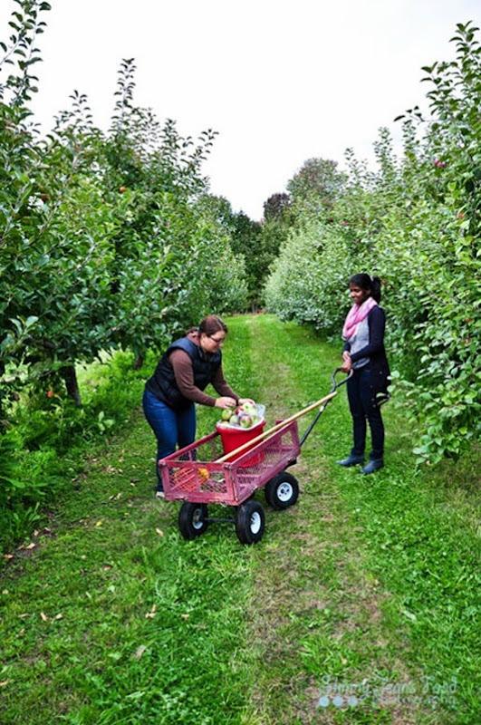 apples-1-4LRSJ